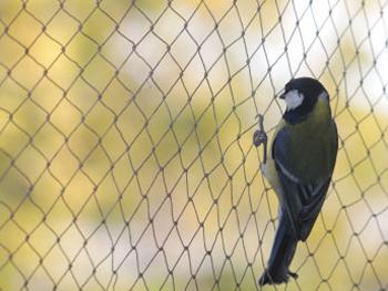bird protection. Black Bedroom Furniture Sets. Home Design Ideas